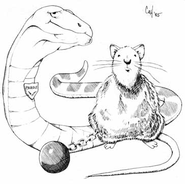 country tales of snakes, rats, dogs, and cats